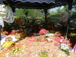Ziua Rozelor Ciumbrud - Aiud