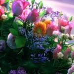 Obiceiuri, superstiţii și tradiții de Florii: Ramurile de salcie sunt așezate înainte de culcare sub pernele fetelor nemăritate | teiusinfo.ro