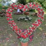 Ziua Rozelor, ediţia a XII-a, la Ciumbrud: Sute de persoane prezente la evenimentul cu cei mai frumoşi trandafiri